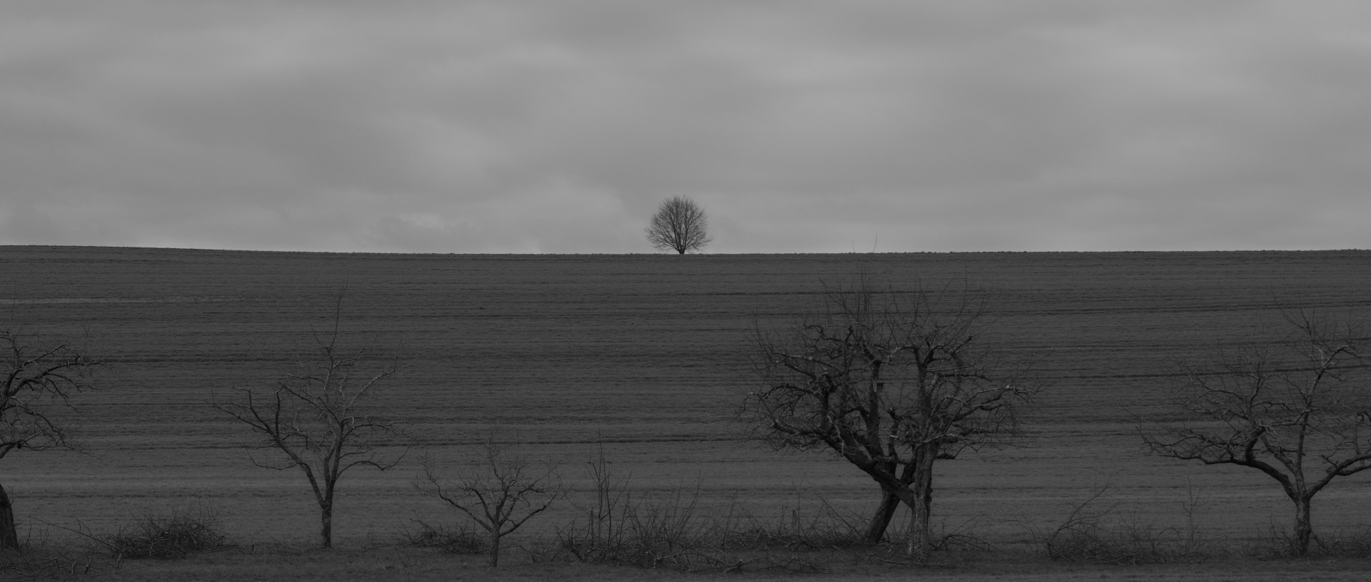 widescreen tree, b/w, sky background