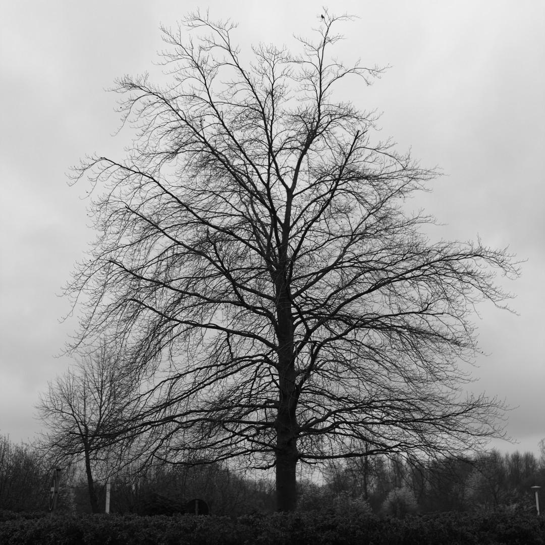 square crop b/w tree