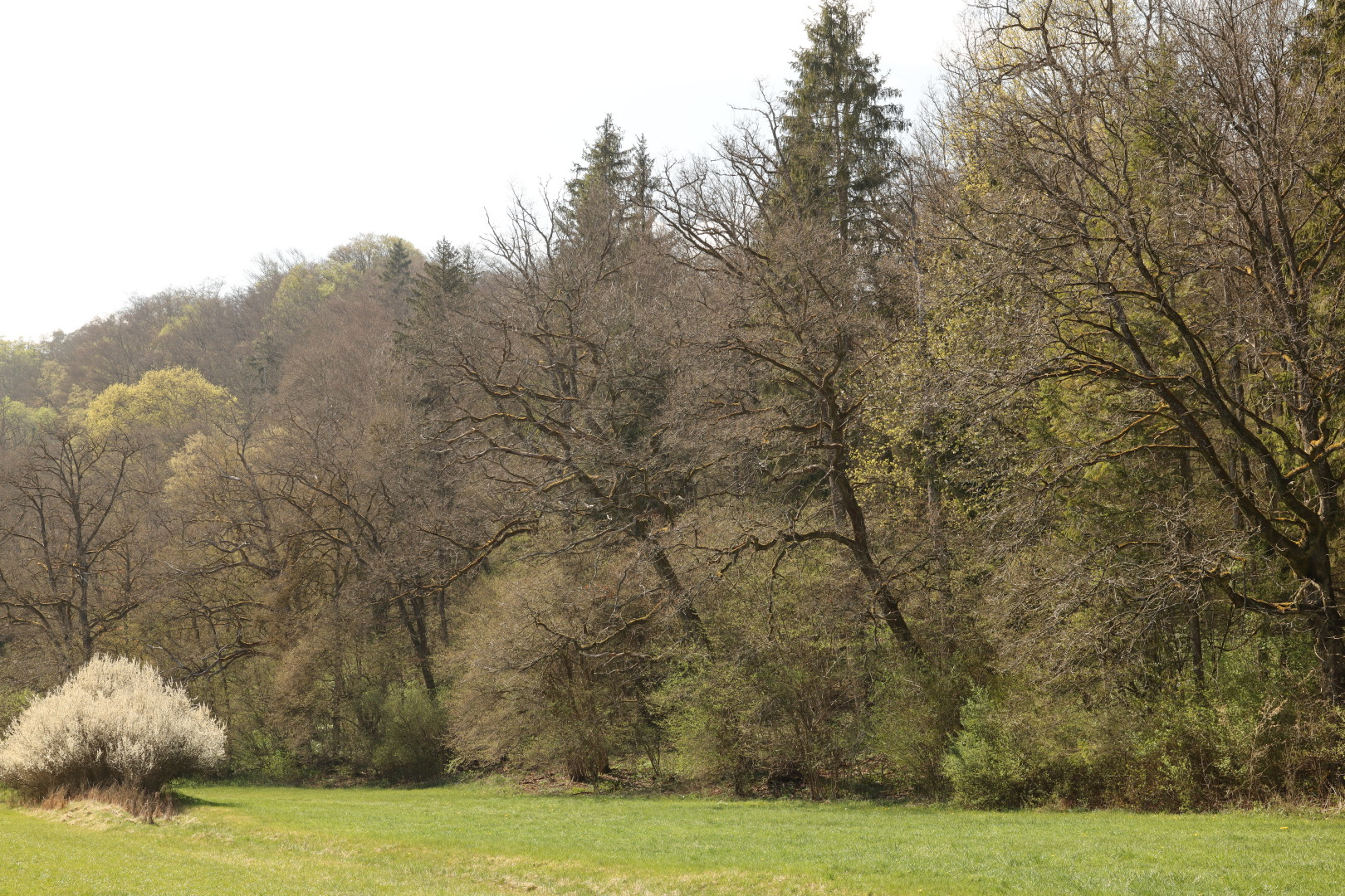 trees and a meadow
