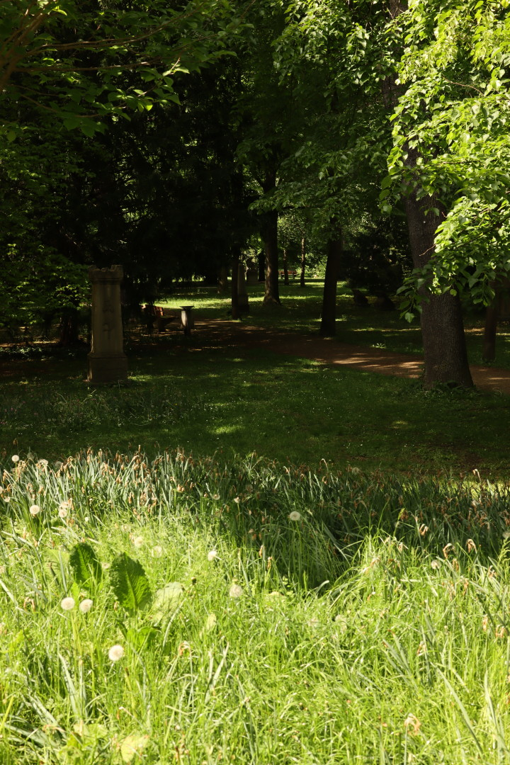 a look into the depth of a park, trees and grass, areas of light and shadow staggered into the depth