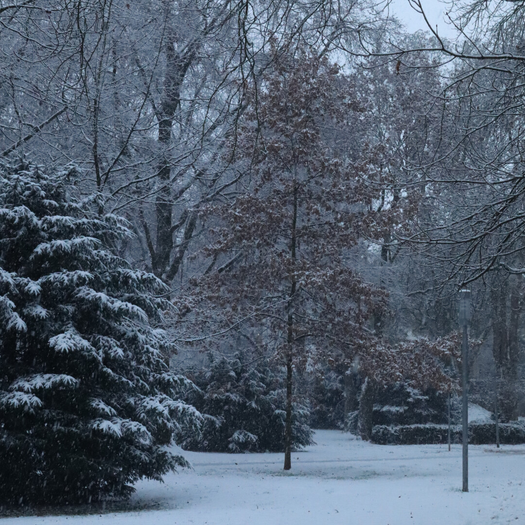 a snow covered scene in the park