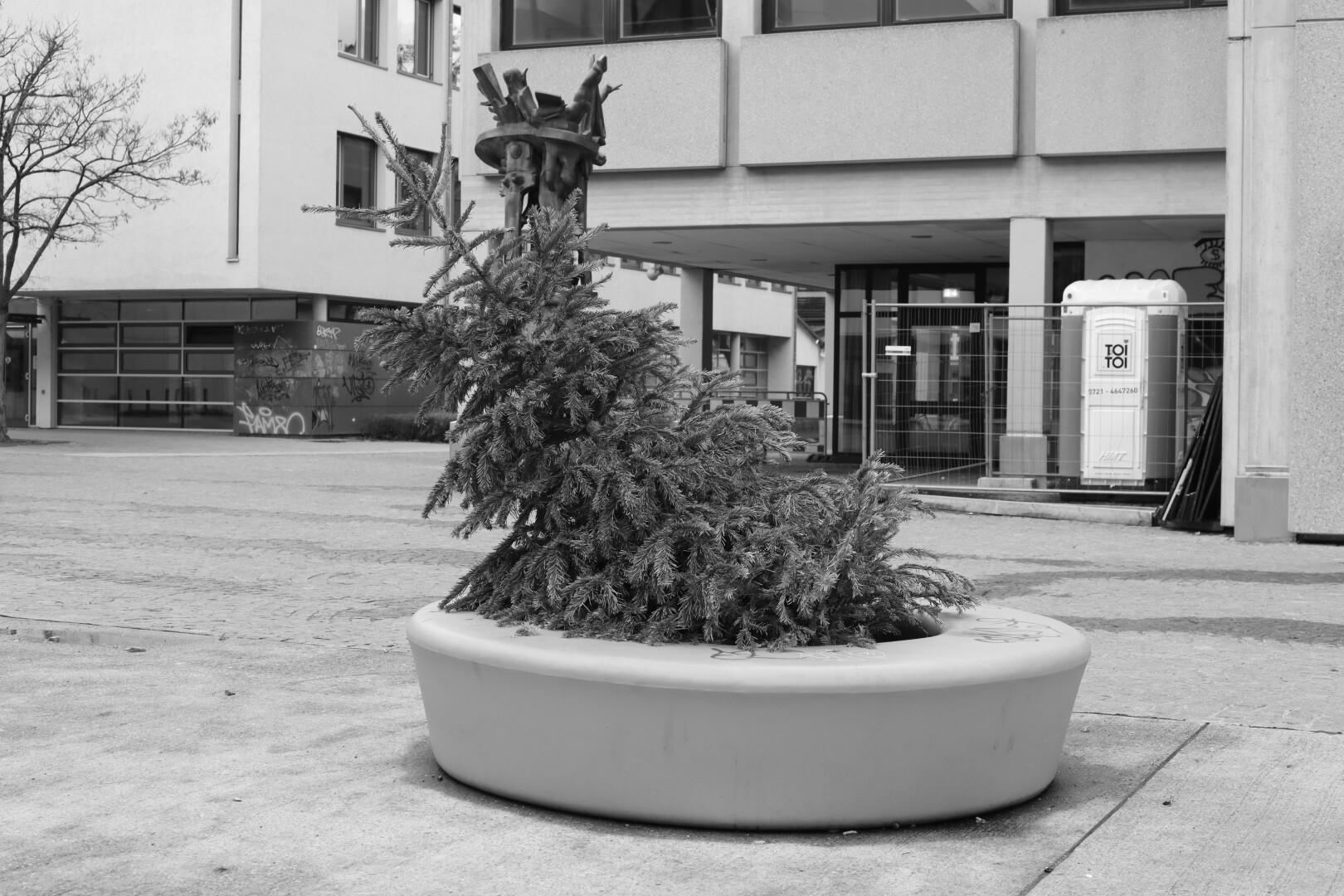 a dumped christmas tree