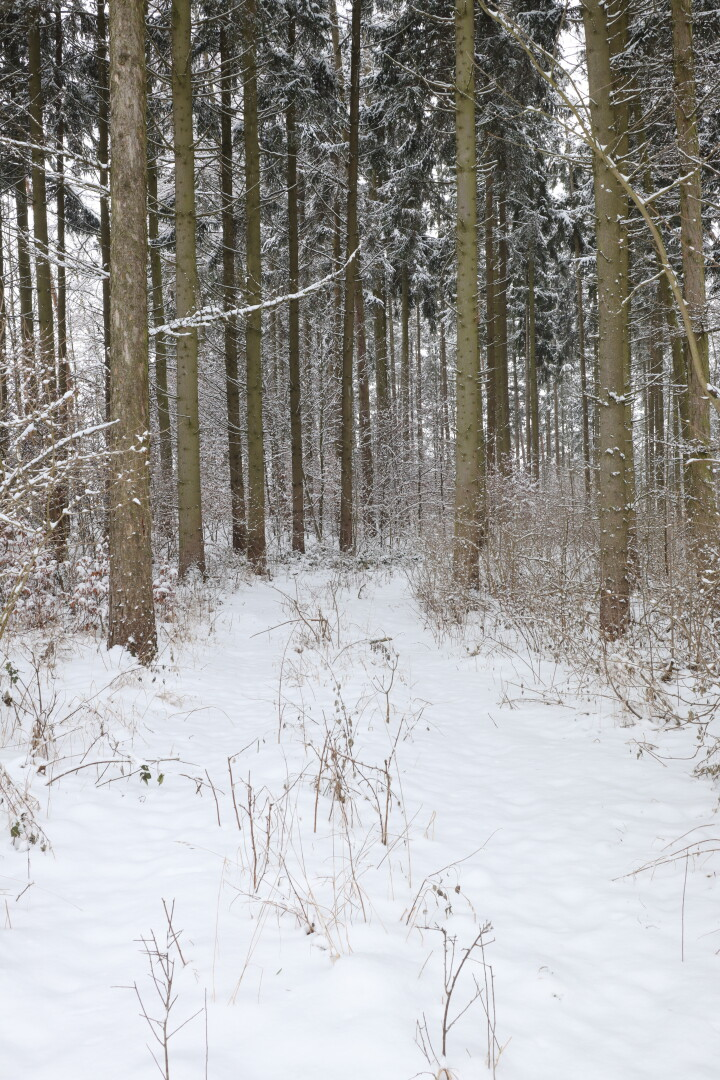 a path in a snowy forest